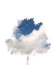 Επικάλυψη ουρανού και σύννεφων σε ένα φυλλώδες δέντρο Στοκ φωτογραφία με δικαίωμα ελεύθερης χρήσης