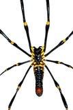 επικίνδυνη αράχνη Στοκ Φωτογραφίες