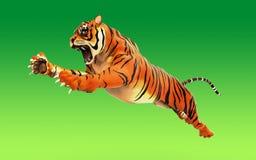 Επικίνδυνη τίγρη της Βεγγάλης που βρυχείται και που πηδά που απομονώνεται Στοκ Εικόνα