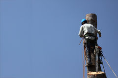 επικίνδυνο trimmer δέντρων εργασιών Στοκ Εικόνες