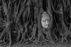 Επικεφαλής άγαλμα του Βούδα, Wat Mahathat, Ayutthaya, Ταϊλάνδη Στοκ εικόνα με δικαίωμα ελεύθερης χρήσης
