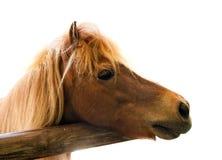 επικεφαλής άλογο Στοκ εικόνες με δικαίωμα ελεύθερης χρήσης