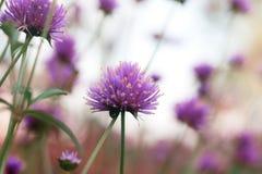 Επικεφαλής λουλούδι με όμορφο Στοκ εικόνα με δικαίωμα ελεύθερης χρήσης