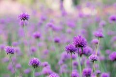 Επικεφαλής λουλούδι στη φυτεία Στοκ εικόνα με δικαίωμα ελεύθερης χρήσης