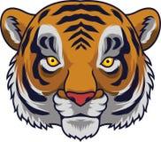 Επικεφαλής μασκότ τιγρών κινούμενων σχεδίων διανυσματική απεικόνιση