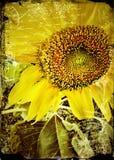 επικεφαλής μεγάλος ηλίανθος σπόρων φυτών Στοκ φωτογραφία με δικαίωμα ελεύθερης χρήσης