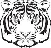 επικεφαλής τίγρη σκιαγρ& Στοκ Φωτογραφίες