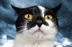 Επικεφαλής της γραπτής γάτας Στοκ εικόνα με δικαίωμα ελεύθερης χρήσης