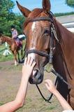 Επικεφαλής άλογο κούρσας Στοκ φωτογραφίες με δικαίωμα ελεύθερης χρήσης