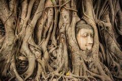 Επικεφαλής δέντρο Wat Maha That Ayutthaya του Βούδα άγαλμα του Βούδα που παγιδεύεται στις ρίζες δέντρων Bodhi ιστορικό πάρκο ayut Στοκ Εικόνες