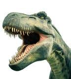 Επικεφαλής αρχαίος τυραννόσαυρος δεινοσαύρων Στοκ Φωτογραφίες