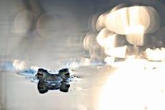 Επικεφαλής βάτραχος στο βάτραχο ελών Στοκ φωτογραφία με δικαίωμα ελεύθερης χρήσης