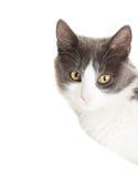 Επικεφαλής γάτα Στοκ φωτογραφία με δικαίωμα ελεύθερης χρήσης