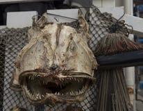 Επικεφαλής δικαίωμα ψαριών μπροστά Στοκ Φωτογραφία