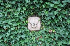 επικεφαλής λιοντάρι Στοκ εικόνα με δικαίωμα ελεύθερης χρήσης