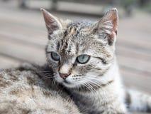 Επικεφαλής μαλακά χρώματα γατών Στοκ Εικόνες