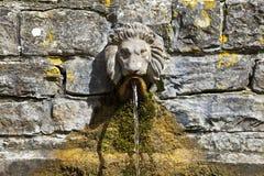 Επικεφαλής πηγή κατανάλωσης λιονταριού στον κάλυκα καλά Στοκ Εικόνες