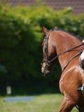 Επικεφαλής πυροβολισμός του αλόγου που κάνει τη εκπαίδευση αλόγου σε περιστροφές Στοκ φωτογραφίες με δικαίωμα ελεύθερης χρήσης