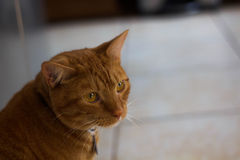 επικεφαλής σπίτι γατών Στοκ Φωτογραφία