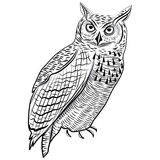 Επικεφαλής σύμβολο πουλιών κουκουβαγιών για το σχέδιο μασκότ ή εμβλημάτων, διανυσματική απεικόνιση λογότυπων για το σχέδιο δερματ Στοκ φωτογραφίες με δικαίωμα ελεύθερης χρήσης