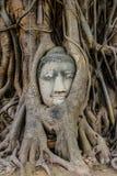 Επικεφαλής της εικόνας του Βούδα στη ρίζα δέντρων Στοκ Εικόνα