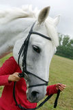 Επικεφαλής του άσπρου αλόγου Στοκ Φωτογραφίες