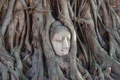 Επικεφαλής του Βούδα στο phra wat mahathat Στοκ Φωτογραφίες