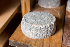 Επικεφαλής του νέου τυριού αιγών με μια μπλε φόρμα Στοκ εικόνα με δικαίωμα ελεύθερης χρήσης