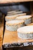 Επικεφαλής του νέου τυριού αιγών με μια μπλε φόρμα Στοκ εικόνες με δικαίωμα ελεύθερης χρήσης