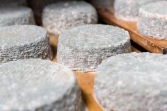 Επικεφαλής του νέου τυριού αιγών με μια μπλε φόρμα Στοκ Εικόνες