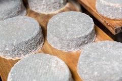 Επικεφαλής του νέου τυριού αιγών με μια μπλε φόρμα Στοκ φωτογραφία με δικαίωμα ελεύθερης χρήσης