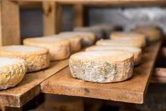 Επικεφαλής του νέου τυριού αιγών με μια μπλε φόρμα Στοκ Φωτογραφίες