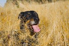 Επικεφαλής του σκυλιού Στοκ φωτογραφία με δικαίωμα ελεύθερης χρήσης
