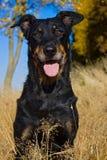 Επικεφαλής του σκυλιού Στοκ εικόνα με δικαίωμα ελεύθερης χρήσης