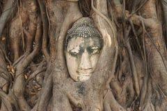 Επικεφαλής του ψαμμίτη Βούδας στις ρίζες δέντρων Στοκ εικόνες με δικαίωμα ελεύθερης χρήσης