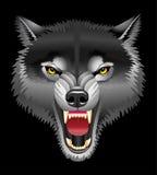επικεφαλής λύκος Στοκ φωτογραφία με δικαίωμα ελεύθερης χρήσης