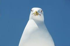 Επικεφαλής seagull στοκ φωτογραφίες
