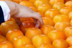 επιλέξτε persimmon Στοκ Εικόνες