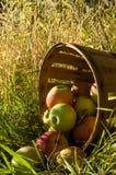 Επιλεγμένο Freshed apples2 Στοκ εικόνα με δικαίωμα ελεύθερης χρήσης