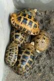 Επιμηκυμένος ύπνος Tortoise από κοινού στοκ εικόνα με δικαίωμα ελεύθερης χρήσης