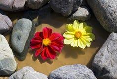 επιπλέοντα λουλούδια στοκ φωτογραφίες με δικαίωμα ελεύθερης χρήσης