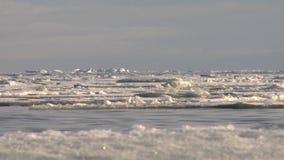 Επιπλέοντα σώματα πάγου στη θάλασσα απόθεμα βίντεο