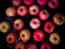 Επιπλέοντα σώματα της Apple στο νερό, εικόνες στους σκοτεινούς τόνους Βλαστός με το phon Στοκ Εικόνα