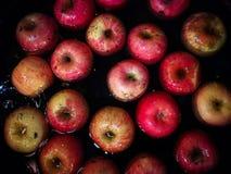 Επιπλέοντα σώματα της Apple στο νερό, εικόνες στους σκοτεινούς τόνους Βλαστός με το phon Στοκ Φωτογραφία