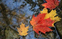 επιπλέοντα φύλλα Στοκ Εικόνες