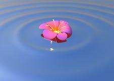επιπλέον λουλούδι Στοκ εικόνες με δικαίωμα ελεύθερης χρήσης