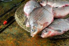 Επιπλέον σώμα κλουβιών ράβδων αλιείας χρυσόψαρων ομάδας στοκ φωτογραφία με δικαίωμα ελεύθερης χρήσης