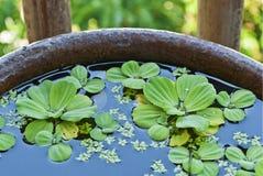 επιπλέουσα λίμνη φυτών Στοκ φωτογραφία με δικαίωμα ελεύθερης χρήσης