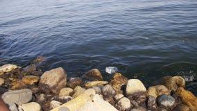 Επιπλέοντα σώματα απορριμάτων στη Κασπία Θάλασσα κοντά στις πέτρες στο ανάχωμα του Μπακού φιλμ μικρού μήκους