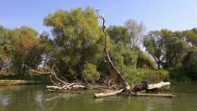 Επιπλέοντα σώματα βαρκών στον ποταμό απόθεμα βίντεο